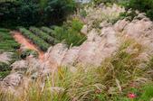 2012-1111苗栗日新島、九湖農場、 棗莊:DSC_3830.jpg