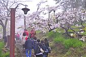 100316悠遊在櫻花的最高殿堂:阿里山櫻花:_DSC0662.JPG