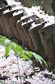 100419帶著相機去流浪:土城桐花公園的四月雪:_DSC1850.JPG