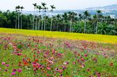 2012-1111苗栗日新島、九湖農場、 棗莊:DSC_3836.jpg