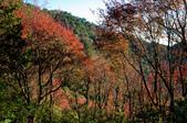 2012-1215大雪山賞楓行(雲海落日、星空):DSC_5496.jpg