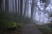 100316悠遊在櫻花的最高殿堂:阿里山櫻花:_DSC0666.JPG
