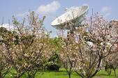 100312陽明山衛星站台附近的櫻花:_DSC0005.JPG