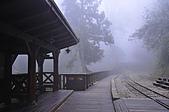 100316悠遊在櫻花的最高殿堂:阿里山櫻花:_DSC0668.JPG