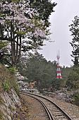 100316悠遊在櫻花的最高殿堂:阿里山櫻花:_DSC0593-1.JPG