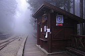 100316悠遊在櫻花的最高殿堂:阿里山櫻花:_DSC0671.JPG