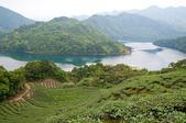 2013-0416石碇千島湖八卦茶園:DSC_0303.jpg