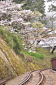 100316悠遊在櫻花的最高殿堂:阿里山櫻花:_DSC0595.JPG