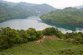 2013-0416石碇千島湖八卦茶園:DSC_0305.jpg