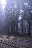 100316悠遊在櫻花的最高殿堂:阿里山櫻花:_DSC0674.JPG