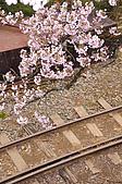 100316悠遊在櫻花的最高殿堂:阿里山櫻花:_DSC0549.JPG