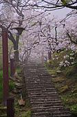 100316悠遊在櫻花的最高殿堂:阿里山櫻花:_DSC0675.JPG