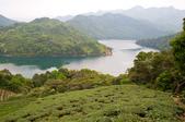 2013-0416石碇千島湖八卦茶園:DSC_0308.jpg