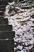 100419帶著相機去流浪:土城桐花公園的四月雪:_DSC1853.JPG