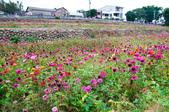 2012-1111苗栗日新島、九湖農場、 棗莊:DSC_3846.jpg