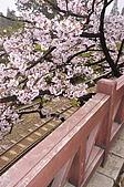 100316悠遊在櫻花的最高殿堂:阿里山櫻花:_DSC0550.JPG