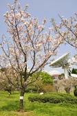 100312陽明山衛星站台附近的櫻花:_DSC0010.JPG