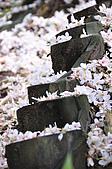 100419帶著相機去流浪:土城桐花公園的四月雪:_DSC1854.JPG