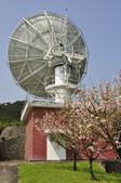 100312陽明山衛星站台附近的櫻花:_DSC0013.JPG