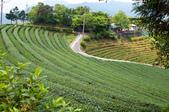 2013-0416石碇千島湖八卦茶園:DSC_0238.jpg