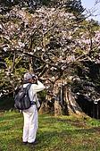 100317悠遊在櫻花的最高殿堂:阿里山櫻花:_DSC0760.JPG