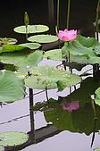 100606植物園荷花初開之喜悅:_DSC3680.JPG