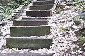 100419帶著相機去流浪:土城桐花公園的四月雪:_DSC1858.JPG