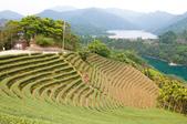 2013-0416石碇千島湖八卦茶園:DSC_0244.jpg