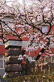 100317悠遊在櫻花的最高殿堂:阿里山櫻花:_DSC0761.JPG