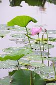 100606植物園荷花初開之喜悅:_DSC3682.JPG