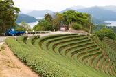 2013-0416石碇千島湖八卦茶園:DSC_0246.jpg