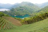 2013-0416石碇千島湖八卦茶園:DSC_0247.jpg
