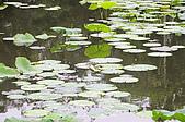 100606植物園荷花初開之喜悅:_DSC3683.JPG