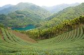 2013-0416石碇千島湖八卦茶園:DSC_0248.jpg