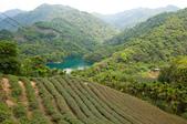 2013-0416石碇千島湖八卦茶園:DSC_0253.jpg