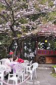 100316悠遊在櫻花的最高殿堂:阿里山櫻花:_DSC0621.JPG