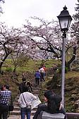 100316悠遊在櫻花的最高殿堂:阿里山櫻花:_DSC0443.JPG