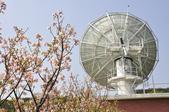 100312陽明山衛星站台附近的櫻花:_DSC0021.JPG