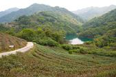2013-0416石碇千島湖八卦茶園:DSC_0257.jpg