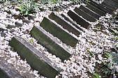 100419帶著相機去流浪:土城桐花公園的四月雪:_DSC1861.JPG