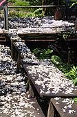 100419帶著相機去流浪:土城桐花公園的四月雪:_DSC1757.JPG