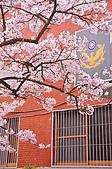 100316悠遊在櫻花的最高殿堂:阿里山櫻花:_DSC0476.JPG