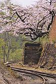 100316悠遊在櫻花的最高殿堂:阿里山櫻花:_DSC0565.JPG