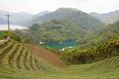2013-0416石碇千島湖八卦茶園:DSC_0260.jpg