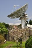 100312陽明山衛星站台附近的櫻花:_DSC0022.JPG