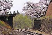 100316悠遊在櫻花的最高殿堂:阿里山櫻花:_DSC0566.JPG