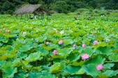 2012-0529台大安坑農場荷花(2012年):DSC_2861.JPG