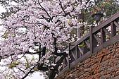 100316悠遊在櫻花的最高殿堂:阿里山櫻花:_DSC0569.JPG