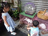 小黑3歲7~8個月:2009_0803_164323.jpg