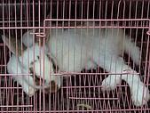 小黑3歲7~8個月:2009_0803_164744.jpg